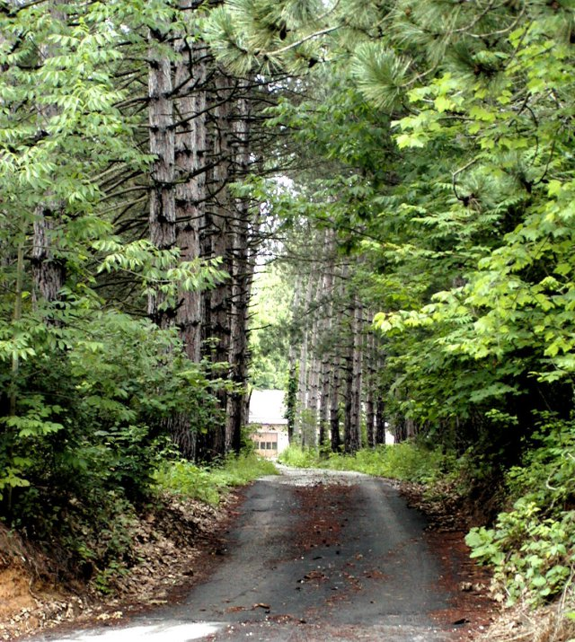 2001 06 30-01m-tree-lined-driveway