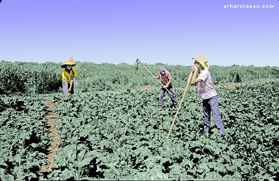 1964 06, 12 Beet Field EH102C m3 sn