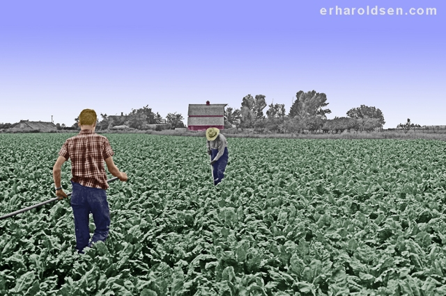 1967 05 (31) m2 sn Allen (16) & Oliver (74) hoeing sugar beets